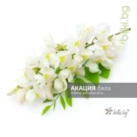 акация бяла, robinia pseudoacacia