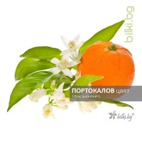 портокалов цвят, citrus aurantium l