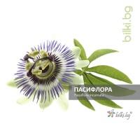 пасифлора, passiflora incarnata