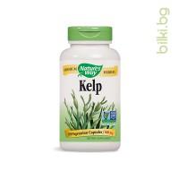 келп, nature's way, щитовидна жлеза, енергия,