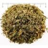 зимзелен билка, билка зимзелен цена, Зимзелен лекарство,  Зим зелен ползи