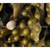 кафяви водорасли  билка, ламинария дигитата,  Laminaria Digitata Algae, Келп за отслабване
