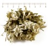 еделвайс билка, планински еделвайс, Еделвайс лечебни свойства, Еделвайс билка цена