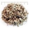 Лопен - цвят, лопен описание, Verbascum phlomoides,