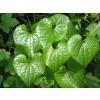 див ям, Dioscorea communis, див ямс менопауза