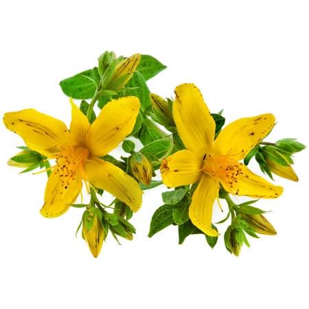 жълт кантарион, жълт кантарион за стомах, жълт кантарион депресия