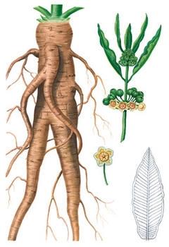характерни особености на узара, узара билка