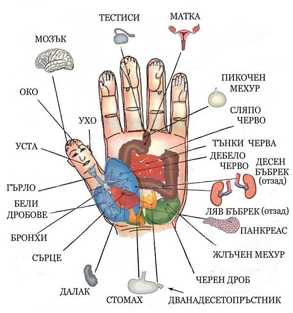 акупунктни точки на ръцете