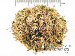 магарешки трън билка