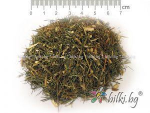 зайча сянка, билка, Asparagus officinalis, аспарагус