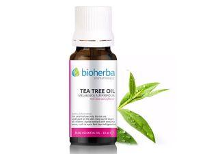 масло от чаено дърво, чаено дърво